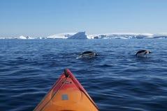 Kajak en het duiken pinguïnen (Antarctica) Royalty-vrije Stock Foto's