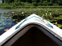 Kajak sul lago canadese Fotografia Stock