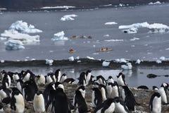 Kajaker och pingvin i Antarktis arkivbilder
