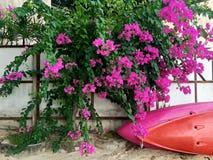 Kajaks liegen nahe dem Zaun unter einem tropischen Busch mit purpurroten Blumen stockfotografie