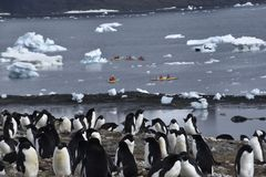 Kajaks y pingüinos en la Antártida imagenes de archivo