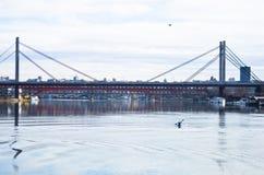 Kajakutbildning på Sava River under vinter royaltyfri bild