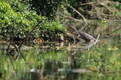 Kajman sjö Nicaragua fotografering för bildbyråer