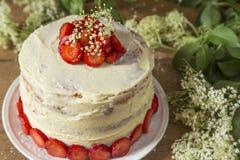 Kaka med en vit chokladpralin och jordgubbar royaltyfri foto