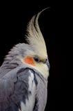 Kakadu Zdjęcia Royalty Free