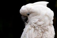 Kakadu Stockfotografie