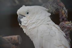 Kakadu Στοκ Εικόνα