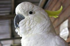Kakadu, australia Stock Photography