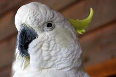 Kakadu, australia Stock Photo