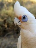 Kakadu, australia Royalty Free Stock Image