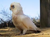 Kakadu, australia Royalty Free Stock Photos