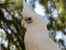 Kakadu, australia Royalty Free Stock Images