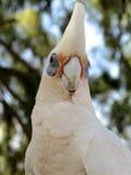 Kakadu, australia Stock Photos