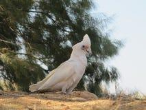 Kakadu, Australien Stockfotos