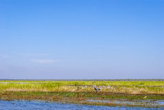 Kakadu National Park (Northern Territory Australia) Royalty Free Stock Photography