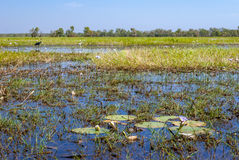 Kakadu National Park (Northern Territory Australia) Stock Images