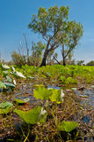 Kakadu National Park vegetation Stock Photo