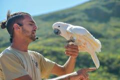 KAKADU w egzotycznych ptakach pokazują przy Palmitos parkiem w Maspalomas, Gran Canaria, Hiszpania Grany CANARIA HISZPANIA, MARZE zdjęcie royalty free