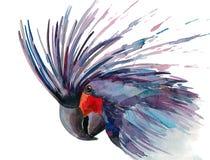 kakadua Royaltyfri Bild