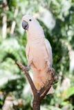 Kakadua i parken Royaltyfria Bilder