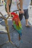 Kakadua och papegoja i den gamla staden av rhodes Royaltyfri Bild