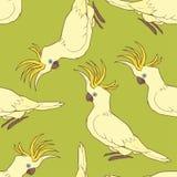 Kakaduamodell Royaltyfri Illustrationer