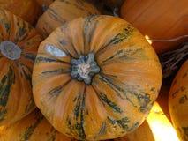 Kakai pumpkin, Cucurbita pepo Royalty Free Stock Images