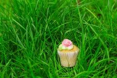 Kakan ligger i det gröna gräset Arkivbild