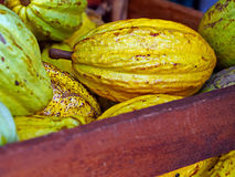Kakao zdjęcia stock