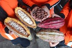 Kakao lizenzfreie stockfotos
