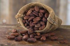 kakao Arkivbild