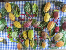 kakao Royaltyfria Bilder
