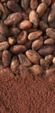 Kakao e fave Stockbild