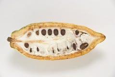 Kakao-Frucht Lizenzfreie Stockfotografie