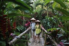 Kakao, Kaffee und Gewürzplantage am Dorf von Kalibaru in Ost-Java Indonesia stockbild