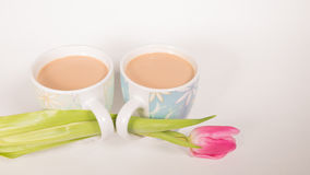Kakao och blomma Royaltyfri Bild