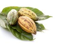 Kakao połuszczy z Kakaowym liściem na bielu obrazy stock