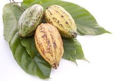 Kakao połuszczy z Kakaowym liściem na bielu obraz royalty free