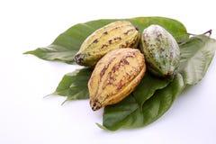 Kakao połuszczy z Kakaowym liściem na bielu zdjęcia stock