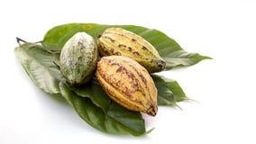 Kakao połuszczy z Kakaowym liściem na bielu fotografia royalty free