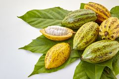 Kakao połuszczy z Kakaowym liściem na bielu zdjęcia royalty free