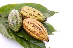Kakao połuszczy z Kakaowym liściem na bielu fotografia stock