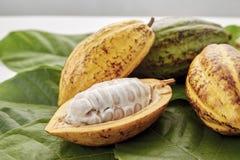 Kakao połuszczy z Kakaowym liściem na bielu zdjęcie royalty free
