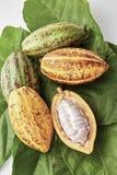 Kakao połuszczy z Kakaowym liściem na bielu obraz stock