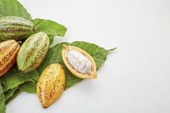 Kakao połuszczy z Kakaowym liściem na bielu zdjęcie stock
