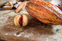 Kakao przy wyspą Grenada fotografia royalty free