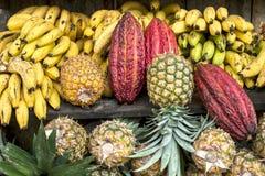 Kakao som omges av andra tropiska frukter Royaltyfria Foton