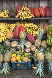 Kakao som omges av andra tropiska frukter Royaltyfria Bilder