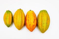 Kakao strąki zdjęcie royalty free