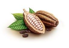 Kakao strąki, kakaowe fasole i liście, Zdjęcie Royalty Free